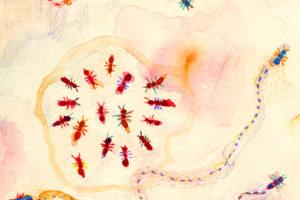 Las hormigas mutantes que no tenían amigos