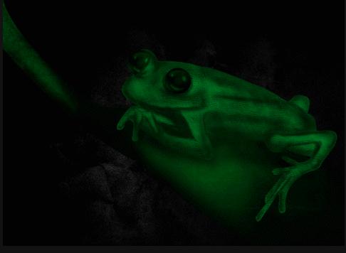 Una rana que brilla en la oscuridad