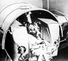 laika en la capsula sputnik