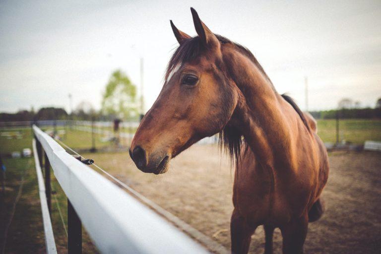 caballos reconocerse en el espejo